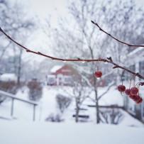 New England Berry